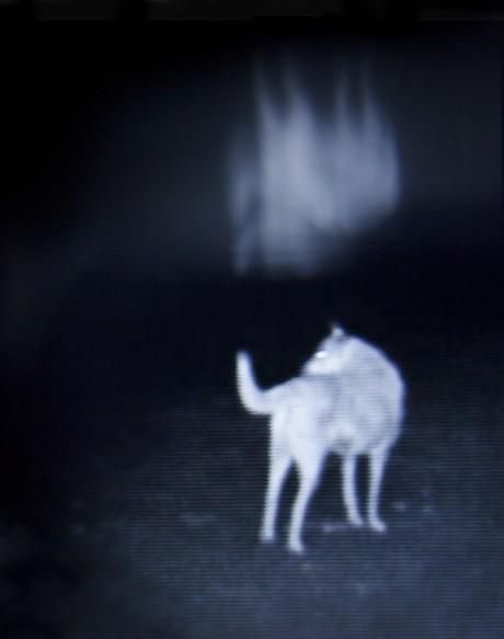 """נעמה פורת, הכלב """"קֶפֶּק"""", 2017, צילום דיגיטאלי דרך מכשיר לראיית לילה,  150x190ס""""מ"""