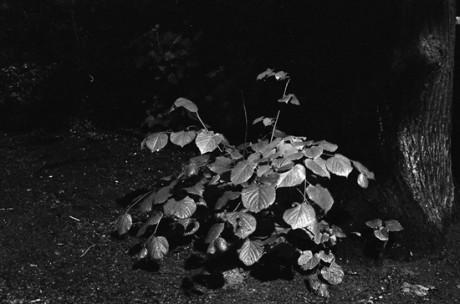 אייל דינר, ראיית לילה, 2011